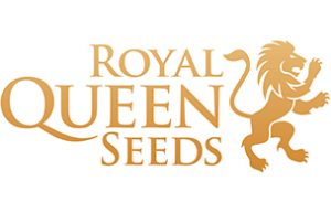 Dr. Smart - Rotterdam - Royal Queen Seeds
